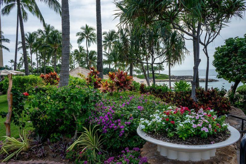 Maui Condo Landscaping