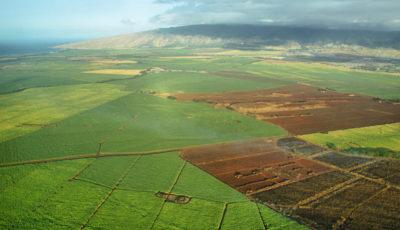 sugar cane land