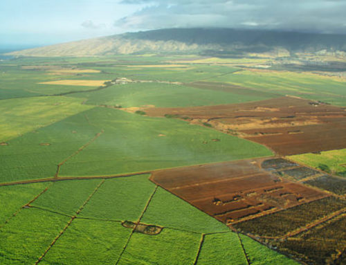 A & B Reinvests Maui Ag Land Proceeds in Hawaii