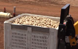 Mahi Pono first crop