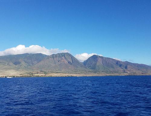 Maui: A Look Back at 2019
