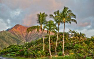 Maui COVID-19